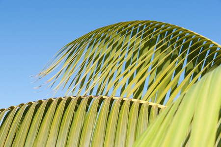 frond: Palm frond detail against sky
