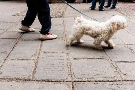 cobbled: Taking dog for walk on European cobbled street