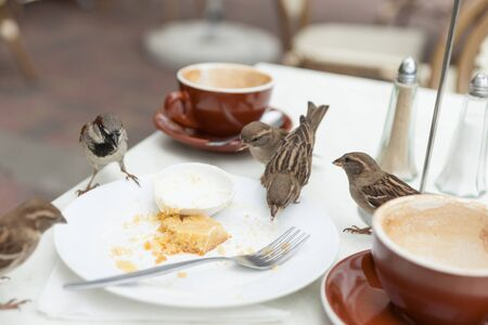 Sparrows dine uninvited at local cafe when patron leave. Stock Photo