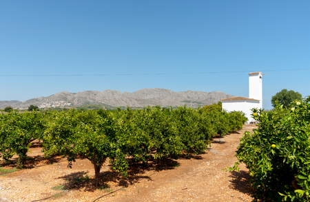 stoney: Citrus orchards deep green leaves on the rows of orange tree and red stoney soil with characteristic whit plaster building In Valencia region Spain. Stock Photo