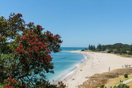 Ocean beach view over and framed by pohutukawa trees from slope of Mount Maunganui Stock Photo