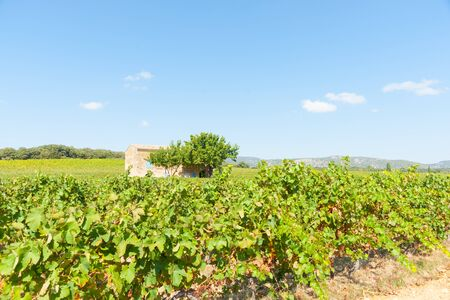os: French vineyards in southern France with two trees beside old stone home with blue shutters near Corneilhan Languedoc-Roussllon region France. Stock Photo