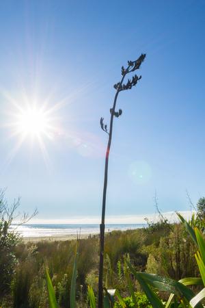 Flax stem back-lit by rising sun 版權商用圖片
