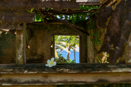 Blurry delicate white frangipani flower on shady window sill of abandoned remains of old home with tropical view through window in Niue.