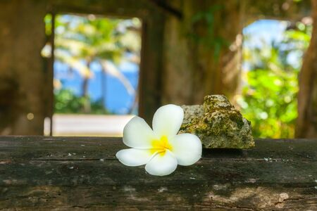 Focus on delicate white frangipani flower on window sill of abandoned remains of old home with tropical view through window in Niue.