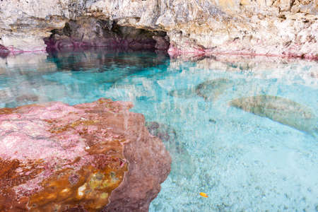 niue: Calm turquoise colored water in coral rock pool in limestone  cave on coast of Niue.