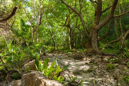 niue: lush green tones of stunning bush walk to wonderful Matapa Chasm a popular travel destination on island of Niue in South Pacific