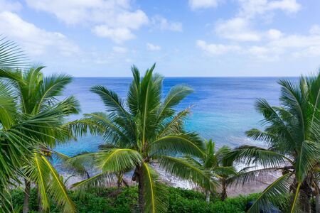 swaying: Tropical scene palm trees and fronds swaying in breeze over ocean  distant horizon and below sky. Stock Photo