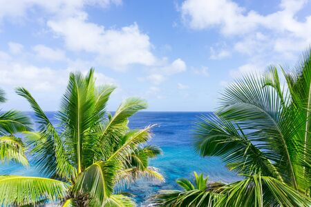 swaying: Turquoise ocean through tropical palm trees and fronds swaying in breeze over ocean  distant horizon and below sky.