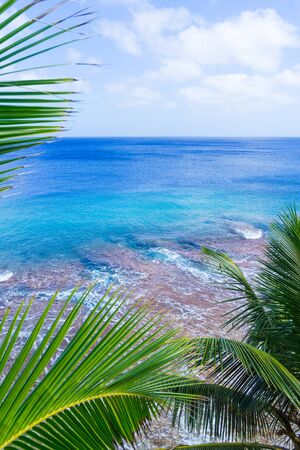 swaying: Vertical tropical scene palm trees and fronds swaying in breeze over coral reef and ocean  distant horizon and below sky. Stock Photo