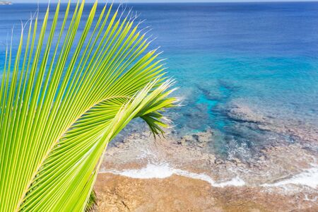 niue: Bright green and yellow coconut palm frond in tropical scene  over ocean  distant horizon and below sky.