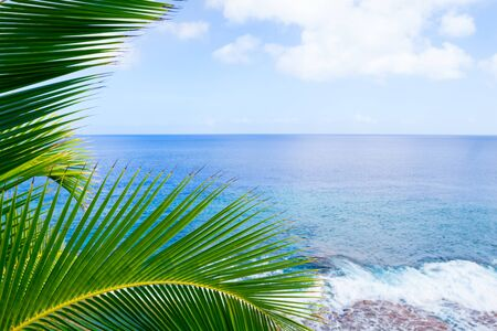 niue: Tropical scene palm trees and fronds framing background scene over ocean  distant horizon and sky. Stock Photo