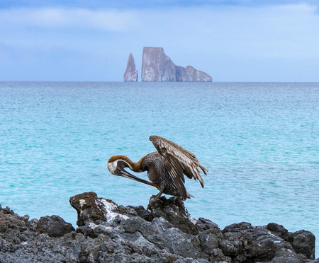Leon Domidos or Kicker Rock, group of three rocks in Galapagos Islands in distance with brown pelican preening itself in foreground.