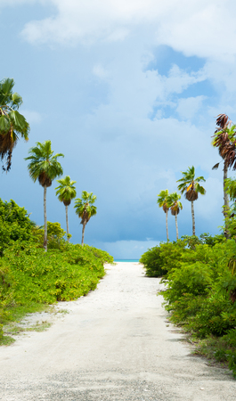 Horizon ahead at end of white sandy path leading between rows of palm trees and green undergrowth to beach Stock Photo