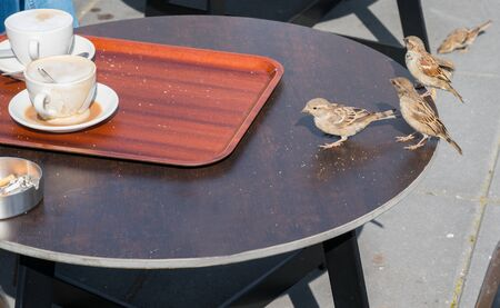 Pesky sparrow scavenging crumbs on cafe table.