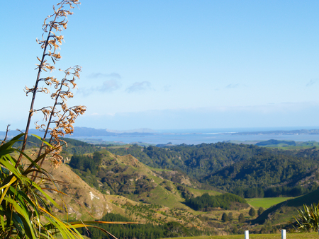 Typical New Zealand rolling coastal countryside
