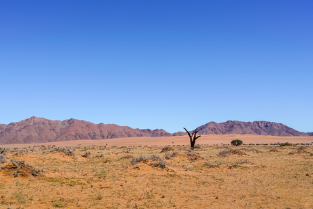 Wide typically southern Namibia landscape of deep iron rich orange soil and red hills with dead tree under blue sky. Stock Photo