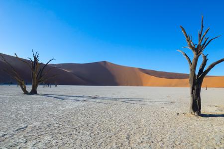 Sossusvlei dunes at Dead Vlei with lens flare, old trees,orange dunes and white  salt pan.