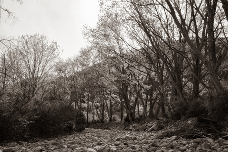 Trees in new spring growth lining dry river bed in sepia tones