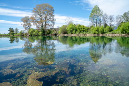 Lime green spring growth of willow leaves along banks of scenic South Island's Takaka  River calm with reflections from surrounding trees.