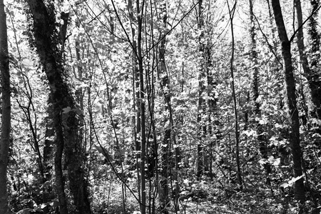 Exotic trees in forest monochrome for background Stock fotó