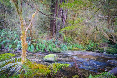 Stream flowing through natural New Zealand bush environment along West Bank of Matakitaki River Stock Photo