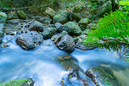 Flowing stream through New Zealand native bush long exposure smoothed water at Mclaren Falls Park Tauranga. 写真素材
