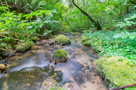 Flowing stream through New Zealand native bush long exposure smoothed water at Mclaren Falls Park Tauranga. 免版税图像
