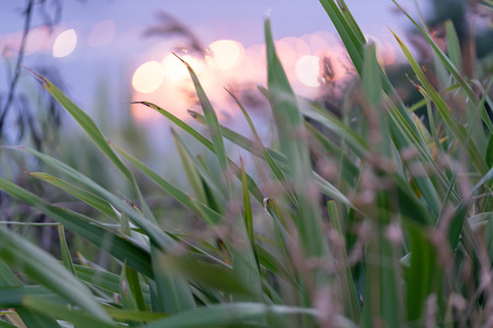 Long exposure grass blowing in breeze with defocused lights behind
