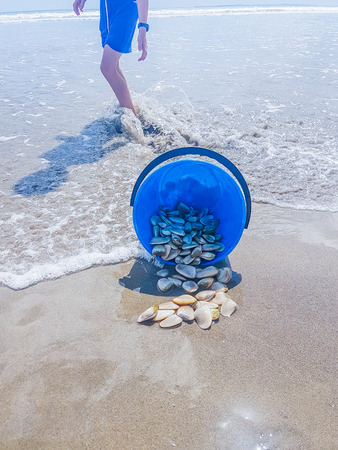 Blue bucket tipped over on beach spilling the gathered tuatua shellfish.