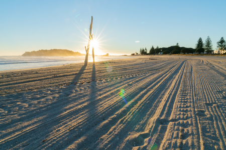 Tracks from beach grooming leading away towards sunrise with sun burst between driftwood standing on beach