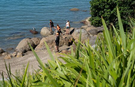 TAURANGA NEW ZEALAND - MARCH 3 2019; Group of people on rocks at Mount Maunganui base looking at cormorant looking back at them Redakční