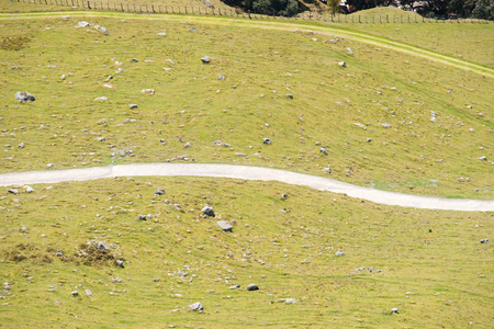 White winding walking track divides sloping field in two parts on Mount Maunganui, New Zealand. Stock Photo