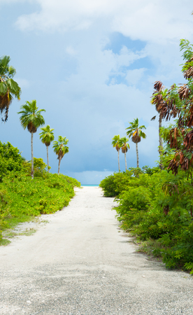 White sandy path between bushes and palm trees leading to beach.