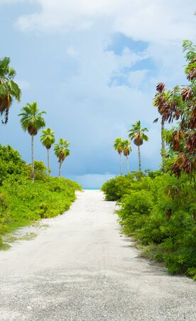 White sandy path between bushes and palm trees leading to beach. 版權商用圖片