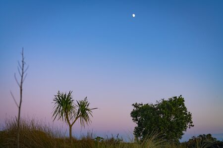 Dune landscape of at dawn with three specires of beach vegetation of ficina and the New Zealand cabbage tree standing out near small pohutukawa against morning sky. 版權商用圖片
