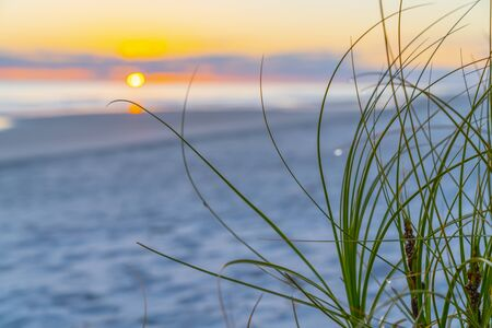Morning light at sunrise at beach at Papamoa with vegetation and defosused sun on horizon for use as background image.