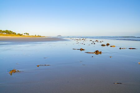 Idyllic morning beach scene low tide with expansive area wet sand on calm morning.