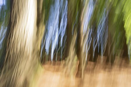 Abstract nature background in forest tall trees and spooky effect. Zdjęcie Seryjne
