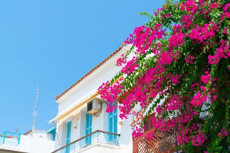 Greek island scene typical white Sporades Islands group architecture with bright pink bougainvillea flowers Greece