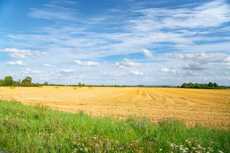 Golden field of freshly cut hay with bales under blue and cloudy sky in English countryside. Banco de Imagens