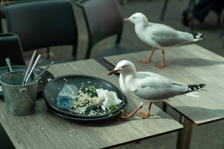 Blurred head of seagull as it moved to scavenge left-over food from cafe table after guest have left.