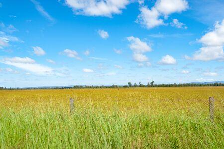 Australian rural view across wide grassy field near distant horizon. Stock Photo