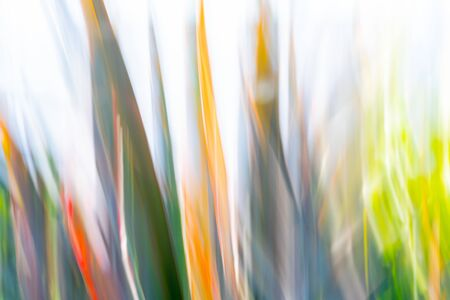 Nature abstract - colored flax blades motion blur.
