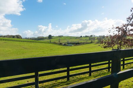 Waikato farmland expansive green fields beyond dark wooden fence and tree New Zealand.