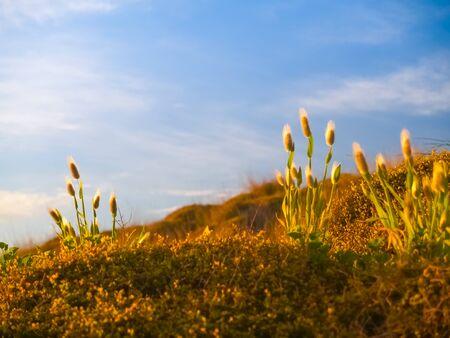 Golden sunrise glow on beach vegetation Papamoa.