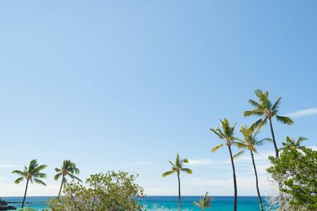 View of tTropical beach with waving palm trees and turquoise sea on island of Hawaii.