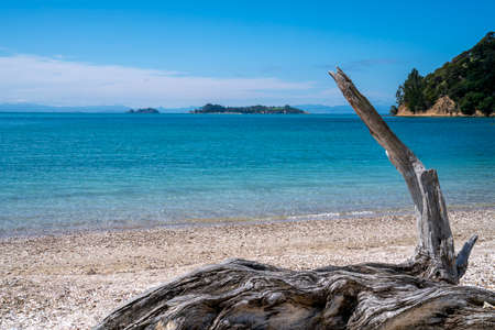 Sparkling turquoise water of scenic bay beyond beach with gnarly driftwood log in foreground. Imagens