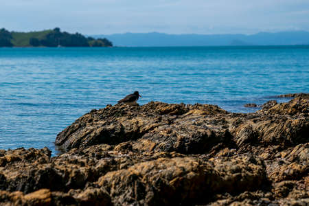 Sparkling turquoise water of scenic bay beyond rocky foreshore. Imagens