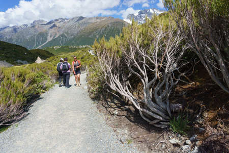 Mount Cook New Zealand - February 16 2015; Tourists walk along gravel track between alpine pine trees on Hooker Valley Track 新聞圖片